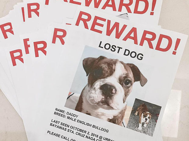 No Dog, No Wedding : Couple's Wedding Almost Cancelled After Bulldog Goes Missing