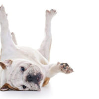 why-do-dogs-kick-when-their-bellies-are-rubbed