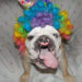 This Amazing Bulldog With Cleft-Palate Is An Anti-Bullying Advocate 1