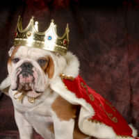 Why Bulldogs Are The Most Expensive Dogs To Own