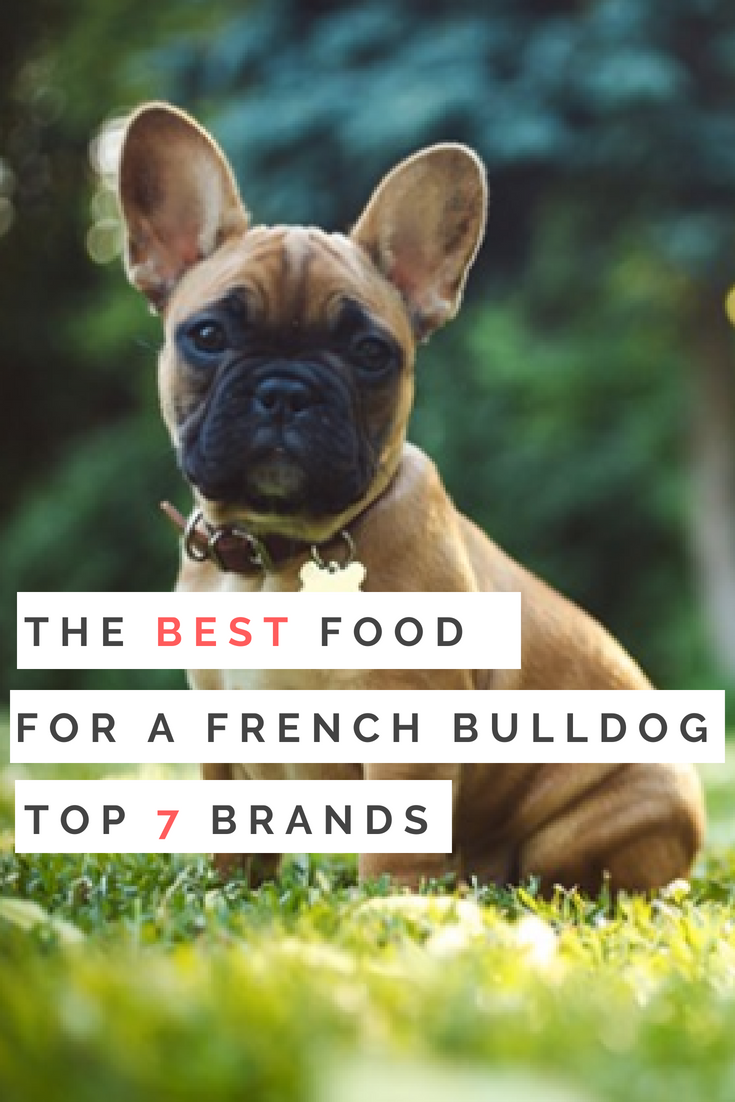 The Best Food for a French Bulldog - A Look at the top 7 brands! Keep your furry family members healthy as can be with the best dog food for french bulldogs, all lined up and explained right here! #BestFoodForFrenchBulldogs #Bulldogs #DogFood