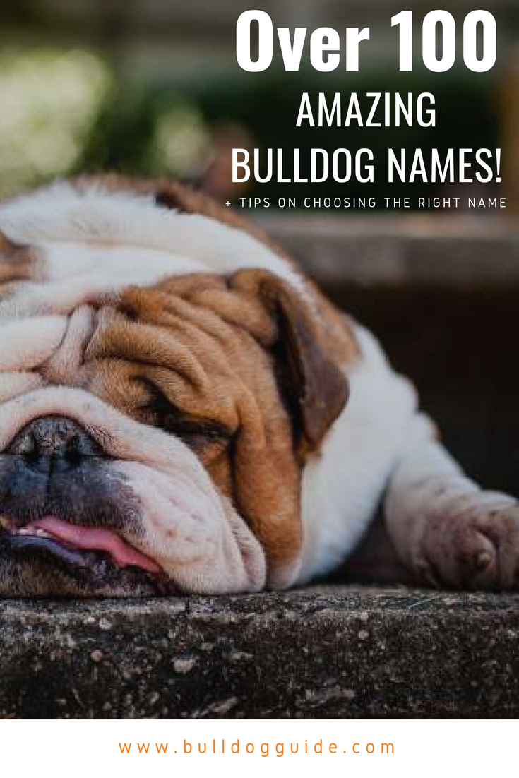 Over 100 Amazing Bulldog Names + Tips on Choosing the Right Name: #Bulldog #bullie