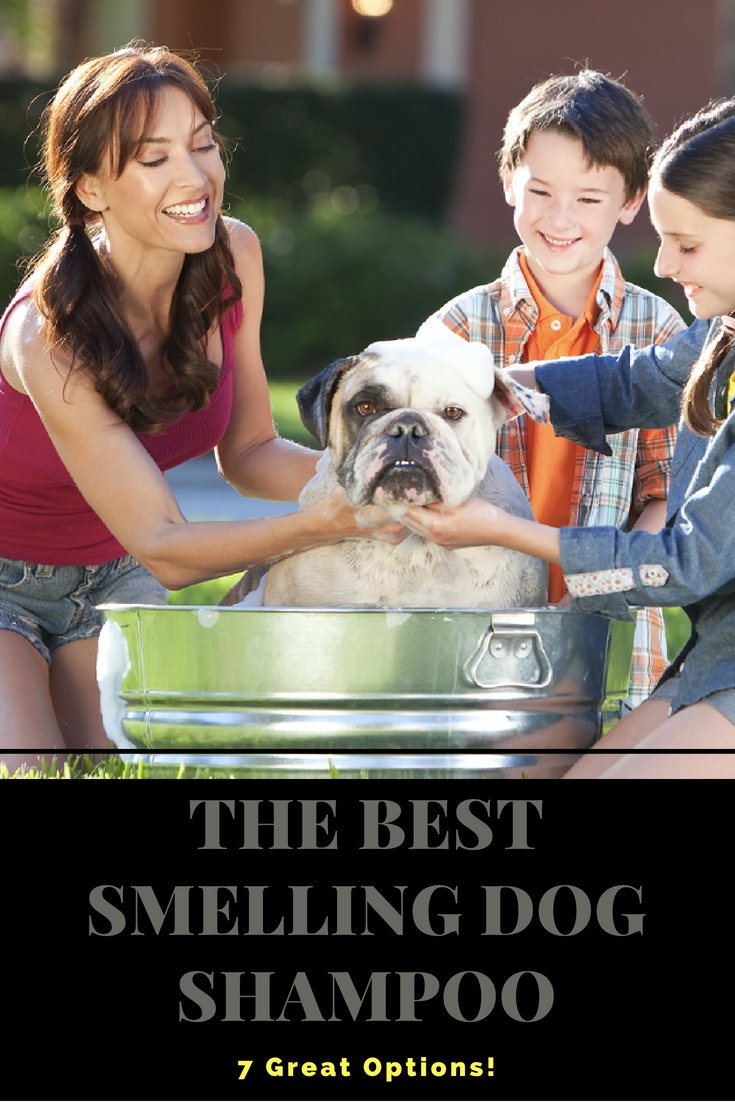 The Best Smelling Dog Shampoo - [7 Great Options] - Because your furry family member(s) should be pampered with only the best smelling dog shampoo out there. #BestSmellingDogShampoo #DogShampoo