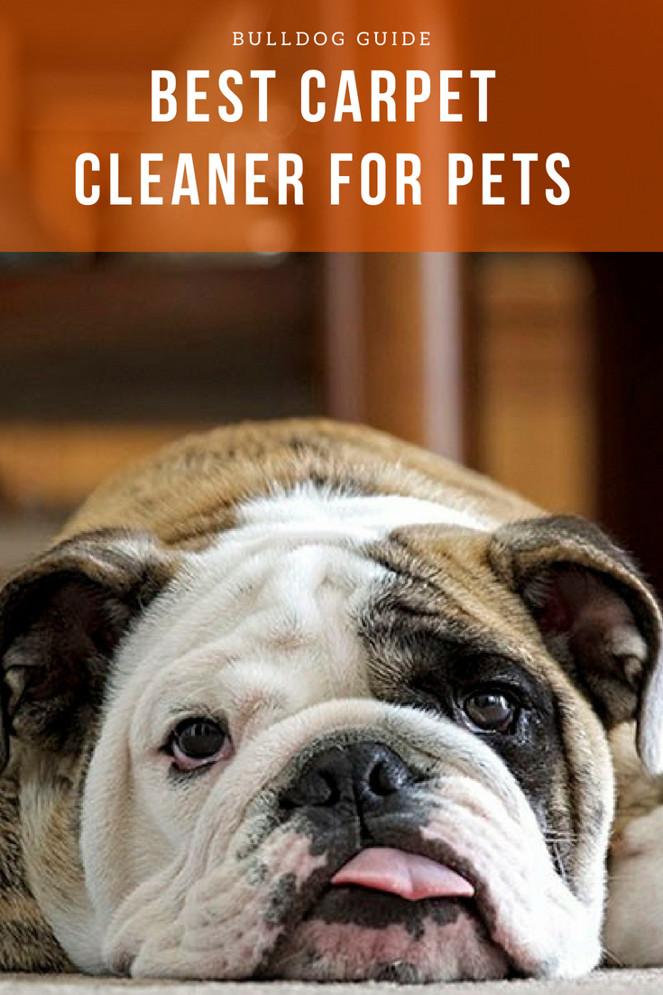 Best Carpet Cleaner For Pets. Keep your house clean and free from any mess your pet might make! #BestCarpetCleanerForPets #CarpetCleaner #Pets #Bulldog