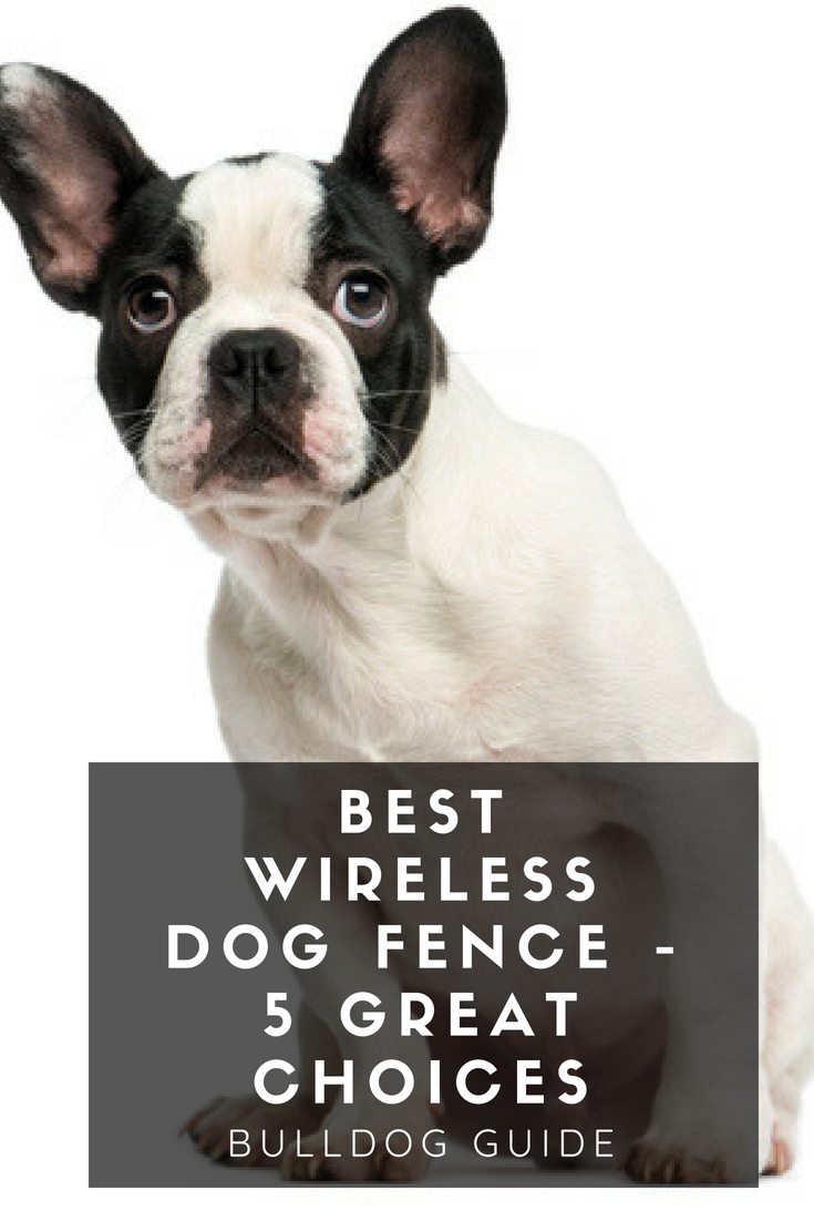 Provide the utmost safety and comfort to your dog while keeping them in your control using any of these best wireless dog fence. #WirelessDogFence #Bulldogs #Bullies