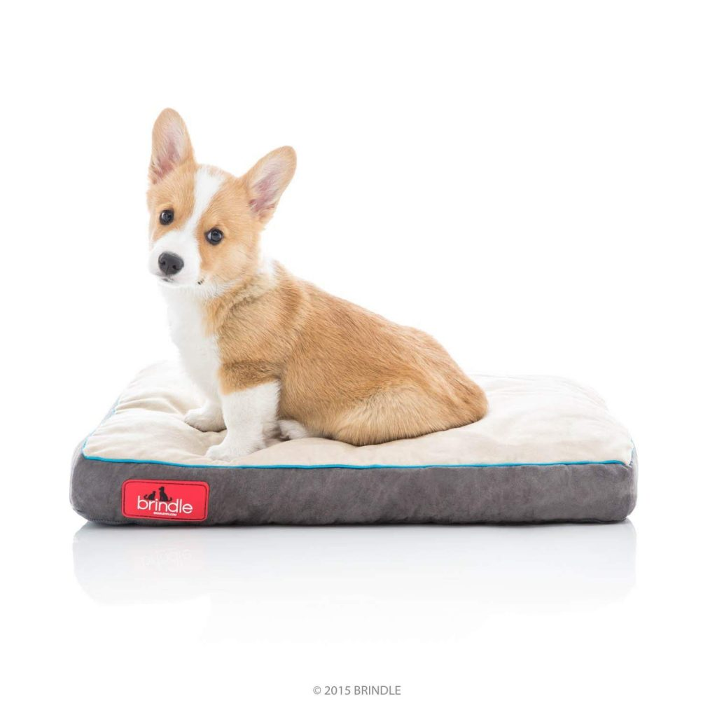 best chew proof dog beds