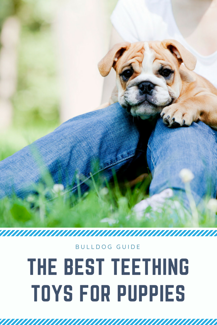 The Best Teething Toys For Puppies. Puppies chewing on furniture and all things expensive is a thing in the past! #TheBestTeethingToysForPuppies #TeethingPuppies #Puppies #Dogs