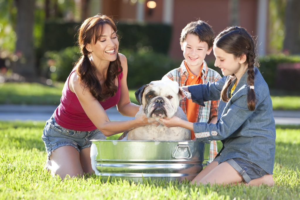 best smelling shampoo for dogs