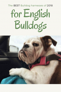 The Best Bulldog Harnesses For English Bulldogs In 2018 best bulldog harness