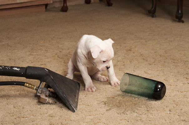 The Best Vacuum for Pet Hair [A look at the top 7!]
