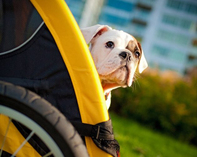 The Best Dog Bike Trailers in 2018 [7 great models]