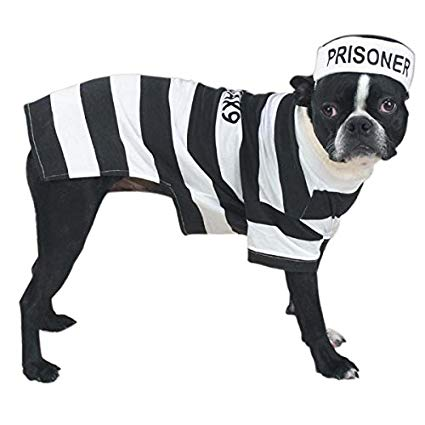 Little Prisoner Dog Costume