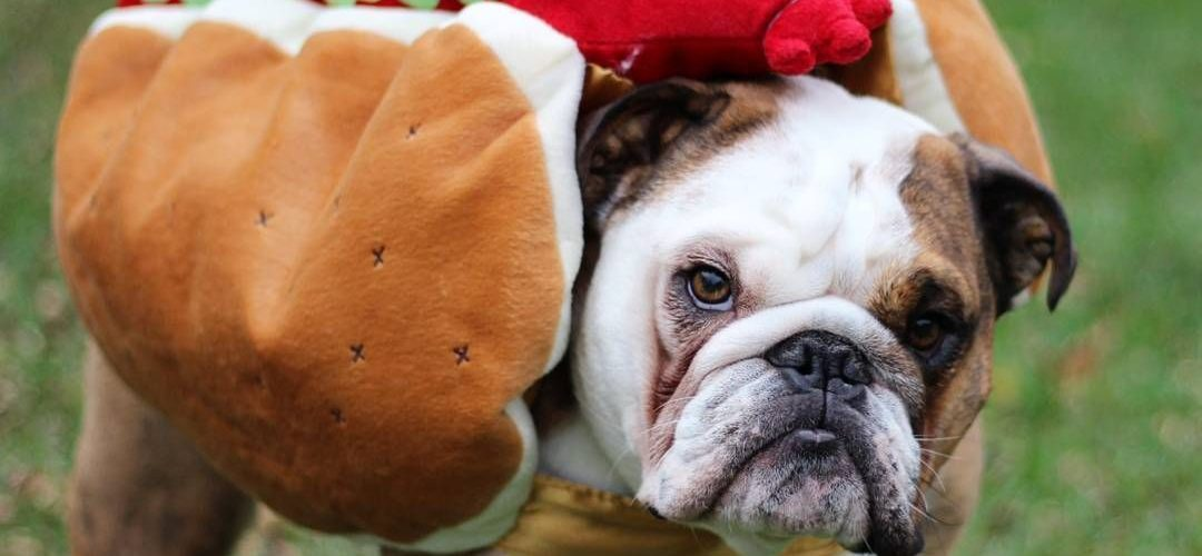 15 Super Fun Halloween Bulldog Costumes