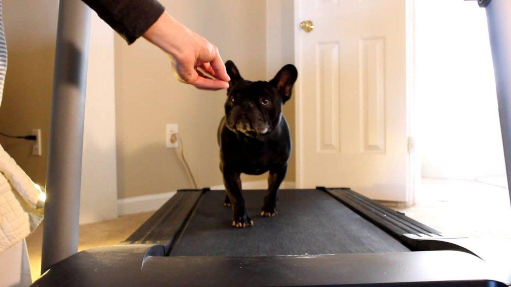 Best dog treadmills