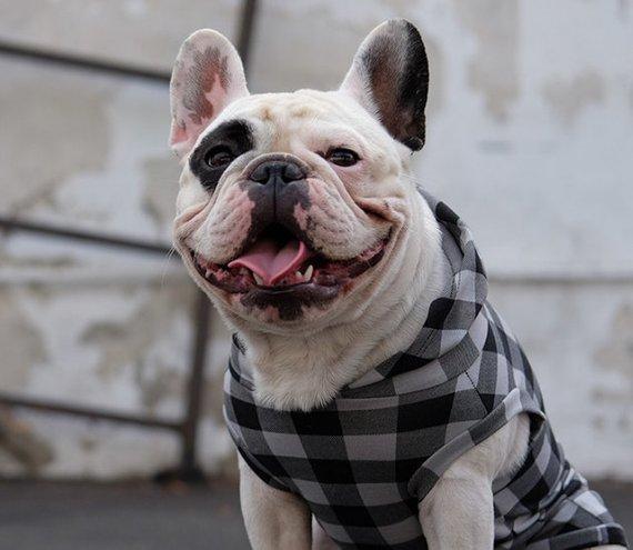 Dog Bosspup Hoodie