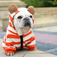 New Hoodies for Frenchies